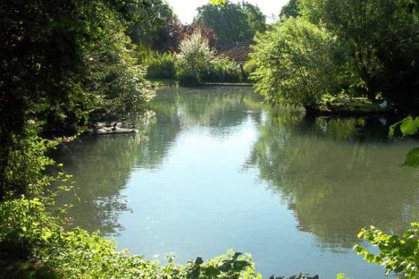 Holybourne_Pond